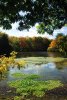 """Ladue Lake Fall"" Photography by Ron Edwards"